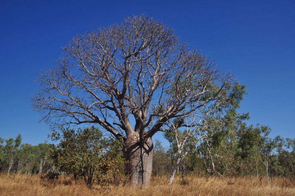 Western Australia Trip - Week 3